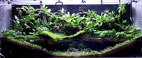 An aquarium viewed from the front. At the bottom front, dark substrate material is built up high at the left and right sides, and low in the center, and its surface is covered by tiny green plants. Water fills the center of the tank, to about halfway up the total height of the tank. Many and various larger plants grow above the water, and over the back wall of the aquarium.