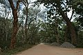 """Old Trees & Hill Station Of """" Savanadurga """" the largest monolith hills in Asia.jpg"""
