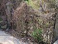Old iron gate - panoramio.jpg