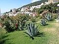 Opatija, agave u parku.jpg