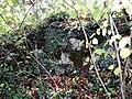 Ostanki Kovačigrajskega gradu 1.JPG