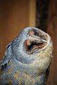 Owls @ Dragonheart, Enschede (9546716713).jpg