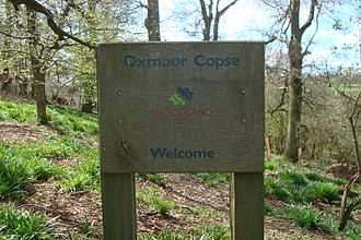 Oxmoor Copse - The copse is managed by the Woodland Trust
