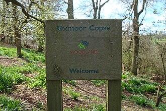 Woodland Trust - Oxmoor Copse in Surrey