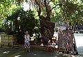 PALMA de MALLORCA, AB-073.jpg