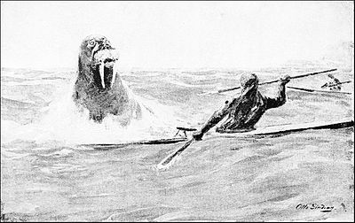 PSM V46 D468 A kayak man attacked by a walrus.jpg