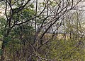 Palenque Outlying Ruins 1986 18.jpg