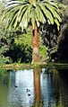 Palm Reflection, Ford Park 3-16 (25843834130).jpg