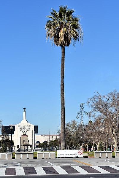 File:Palm tree expo park coliseum peristyle.jpg