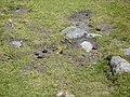 Papallona entre el Prat Fondal i l'estany Mal P1300516.jpg