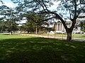 Parc de L'Université de Kinshasa 2.jpg
