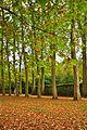 Paris Versailles (6287604483).jpg