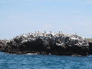 Islas Marietas National Park - Many species of birds make the Islands their breeding and feeding ground