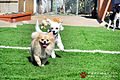 Pawliday Inn Pet Resort 35.JPG