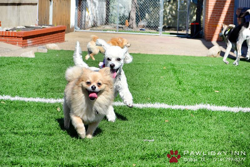 Dallas Dog Grooming Wanneroo