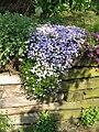 Phlox Emerald Cushion Blue01.jpg