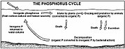 Diagramme du Cycle du phosphore
