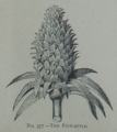 Picture Natural History - No 357 - The Pine-apple.png