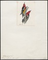 Picus ruber - 1820-1860 - Print - Iconographia Zoologica - Special Collections University of Amsterdam - UBA01 IZ18700111.tif