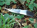 Pigeon feather near the Ox Drove - geograph.org.uk - 593199.jpg