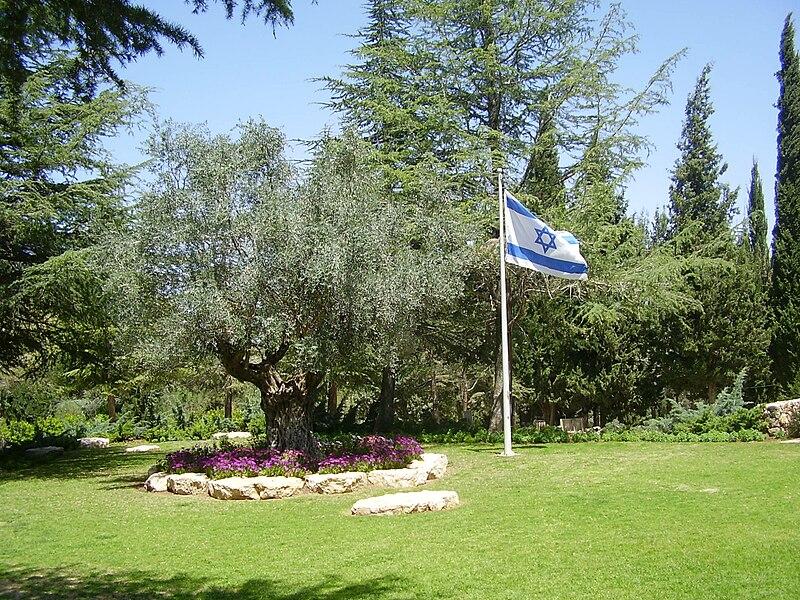 עץ זית בחלקת גדולי האומה
