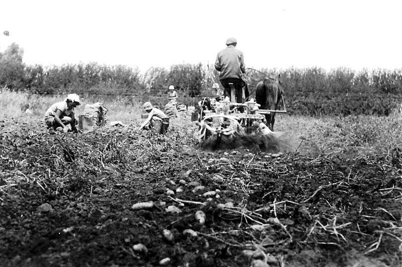 גן-שמואל-בשדה 1944