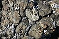 Pillow Lava at Crozon Brittany France.jpg