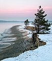 Pine by the sea on Furilden, Gotland.jpg