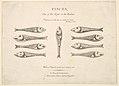 Pisces- Hogarth's Quadrille Fish MET DP825003.jpg