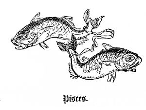 English: Drawing of Pisces, the twelfth zodiac...
