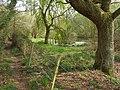 Pond west of Bull Hill Farm - geograph.org.uk - 401056.jpg