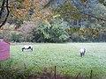 Ponies, Blengdale - geograph.org.uk - 1531198.jpg
