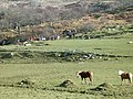 Ponies and riders - geograph.org.uk - 127685.jpg