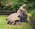 Prague Zoo - turtles.jpg