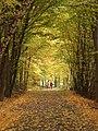 Praha, Kunratice, podzimní Kunratický les.JPG