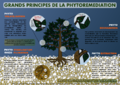 Principes phytoremediation.png