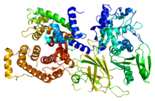 Protein CAPN2 PDB 1df0.png