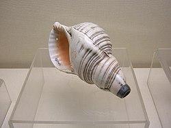 Qing military conch.JPG