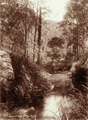 Queensland State Archives 2469 Waterfall Gully Mount May Maroon 1896.png