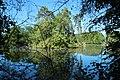 Réserve naturelle régionale des étangs de Bonnelles le 26 mai 2017 - 39.jpg