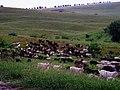 R30, Căușeni, Moldova - panoramio (5).jpg