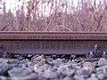 Rail BVG 1962.jpg