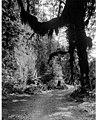 Rain forest, Olympic Peninsula, Washington, ca 1925 (WASTATE 248).jpg