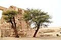 Ramesseum 2016-03-23za.jpg