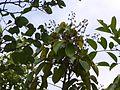 Rawanito (in Marathi) (5781540746).jpg