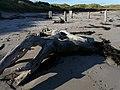 Reclining Nude, Driftwood - geograph.org.uk - 1039680.jpg