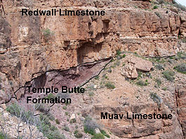 Redwall, Temple Butte and Muav formations in Grand Canyon.jpg