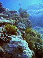 Reef2178 - Flickr - NOAA Photo Library.jpg