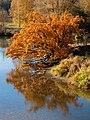 Regintz Herbst Buger Wiesen 121701-PSD.jpg