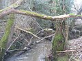 Remains of Sluice Gates on the River Grom - geograph.org.uk - 1736790.jpg